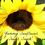 Fertile Ground & Sunflower Seeds Snack