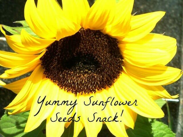 Fertile Ground & Sunflower Seeds Snack