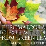 Fall Science Experiment: Use Chromatography to Extract Color from Green Leaves