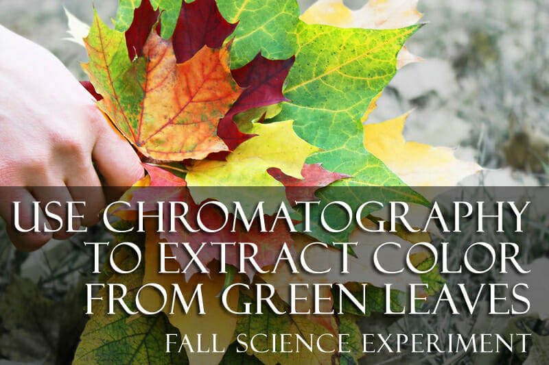 chromatography fall science experiment