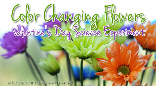 """Color Changing Flowers"" Valentines Day Science Experiment"
