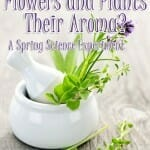 May Flowers Science Experiment: What Gives Flowers and Plants Their Aroma