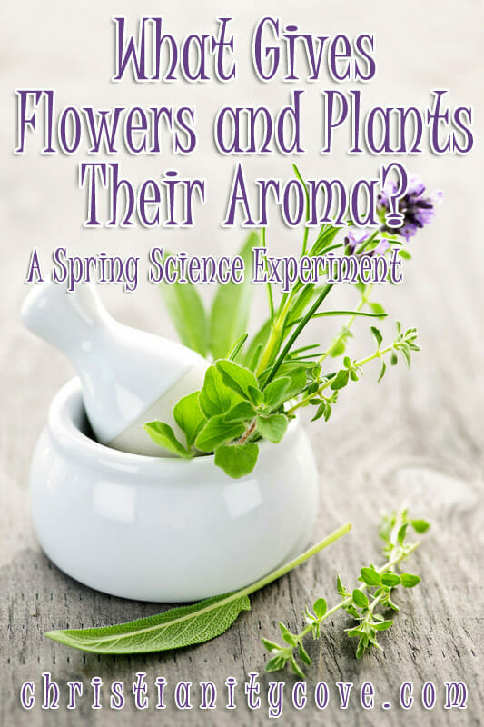 science experiment flowers aroma