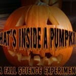 whats inside a pumpkin fall science experiment 2