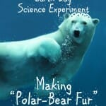 earth day science experiment polar bear fur