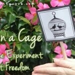 """Bird in a Cage"" """" A Science Experiment about Freedom"