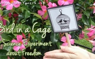 bird in a cage science experiment
