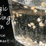 Magic Dancing Corn – A Bible Science Experiment